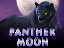 Panther Moon и бонусы