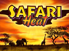 Автоматы Safari Heat на деньги